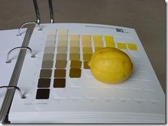 lemon-702985